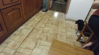 Dog Does the Mopping in Moscow