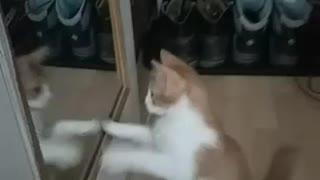 Mirror vs. kitty