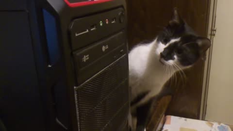 Cat's Mind Is Blown By The CD-ROM Drive