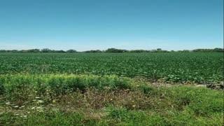 Video of fields