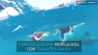 Cara Delevingne nada com tubarões-baleia no México