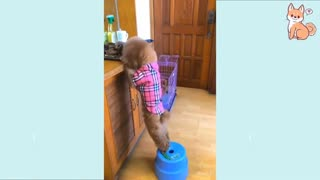 Funny Dog Videos That Are Priceless