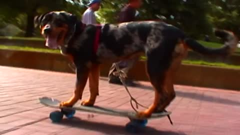 Dog Has Some MAD Skills