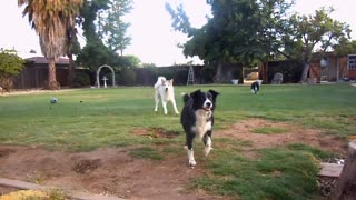Dogs playing outside must watch video