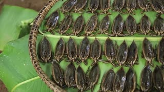 Yummy cooking lethocerus recipe _ Cooking skills _ Khmer Survival Skills