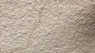 Stucco Wall Crack Repair