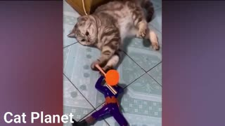 planet cat of expert cats