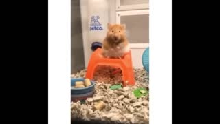 Cat and Cat funny video