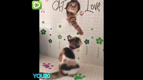 funny cat clips A wonderful