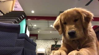 """Disciplined dog perfects the """"wait"""" trick for the camera"""