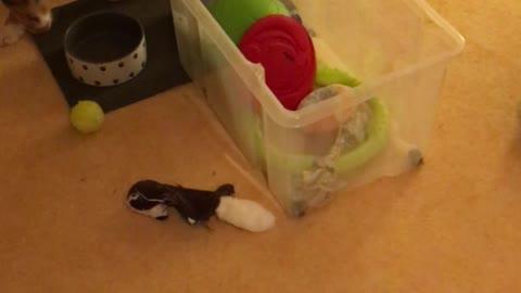Cute puppy tries to reach his toys