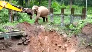 Elephant rescued by villagers-2021 #Manusaiyed