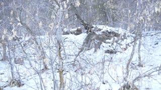 Where Does Sasquatch Winter