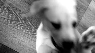 Puppy enjoys being tickled
