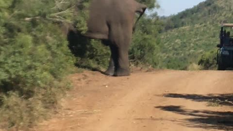 Invading an elephant's privacy