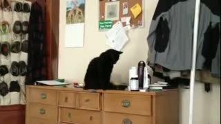Harmful black cat