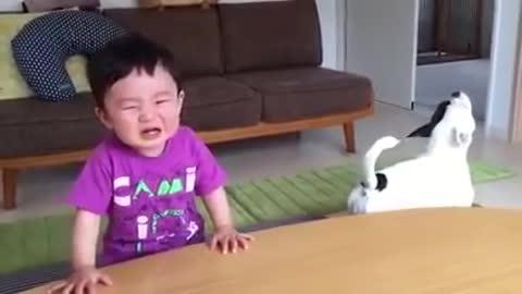 Funny video dog and child quarrel