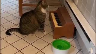 My cat plays the piano when he's hungry