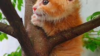 Cat funny video 🤣