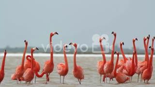 Flamingo elegance
