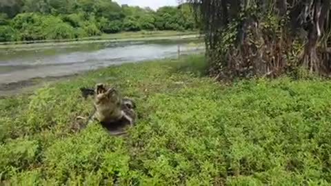 A SURPRISE CATCH WHEN FISHING