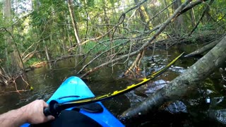 Kayaker Has a Very Close Encounter with Alligator in North Carolina