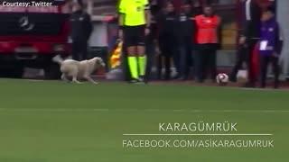Video of a dog interrupting soccer