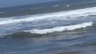 Girl at beach crab walking in water