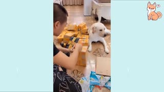 Cute puppies, cute and smart dogs