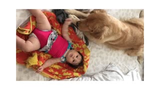 Excited Dog Tries To Relax In Order To Play With Baby