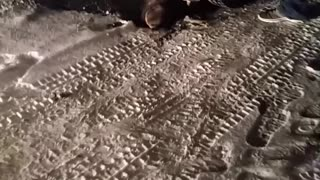 Moose Gets Stuck Under a Truck