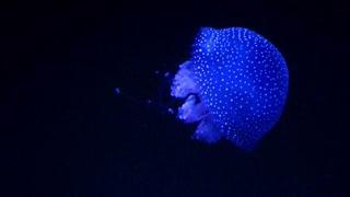 Glowing Jellyfish In Dark Water