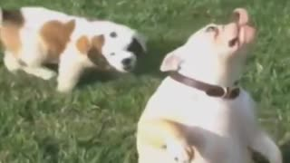 Best Funny Animals Fails Compilation