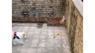 Play with my sweet adorable dog