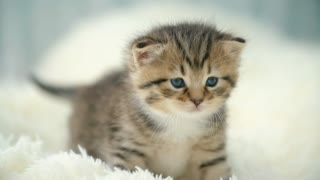 Little kitty on a blanket nice cute cats