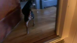 Kitty hunt !! Chester's best friend