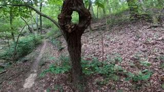 Old tree growing into itself
