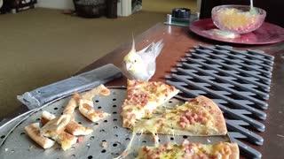 Cockatiel enjoys eating pizza