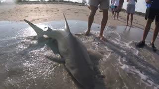 The sea animals rescue