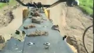 Cat Motor Grader Test video