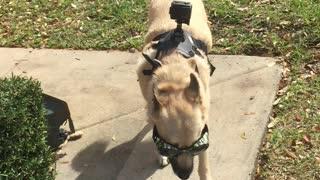 Service dog camera dog