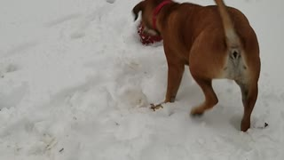 First time seeing snow