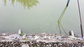 Wild Archerfish Spraying Water At Me