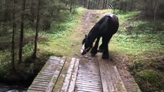 """Horse decides to find """"better"""" way to cross stream"""