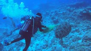 Scuba Divers Save Sea Turtle Tangled in Net