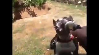 funny videos of talking animals kkkkkk