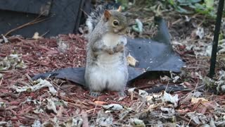 Squirrel looking for a lifeguard