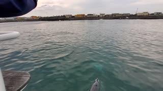 hi dolphin