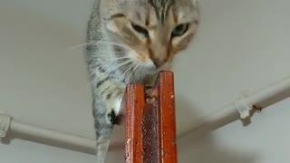 Acrobatic Cat Chills Out On Top Of Door