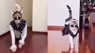 Funny humans acting like animals |LOL| Funny videos| Funny Humans|relaxingmusiq